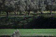 Agricultores denuncian que apenas pueden hacer quemas en el Bajo Aragón