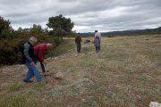 Plantan ciento cincuenta pinos en un antiguo vertedero de Aguaviva