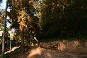 Árboles secos de Pui Pinos con riesgo de caer