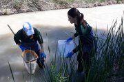 Se analiza el río Guadalope entre Santolea y Calanda