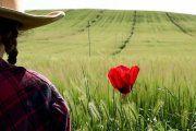 Buscan autores de cortometrajes rurales en Urrea de Gaén