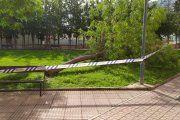 Alcañiz. Cae un árbol en la calle Concepción Gimeno Gil