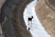 Se crearán dos nuevas salidas de animales en el canal Calanda-Alcañiz