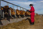 El emprendimiento de las mujeres en zonas rurales se analizará en Alcañiz