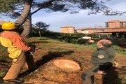 Agentes para la Protección de la Naturaleza retiran árboles caídos junto a la Guardería de Alcañiz