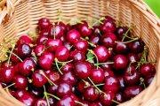 ¿Quién recogerá las cerezas en el Bajo Aragón?