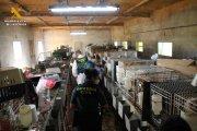 Investigados por cría ilegal y maltrato de más de 500 perros en Maella