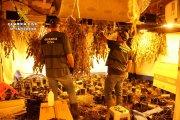Detenido por cultivo de marihuana en una vivienda del Matarraña