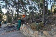 Talan árboles del cerro Pui Pinos de Alcañiz