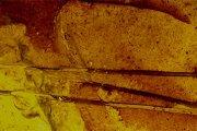 Hallan en Ariño los pelos de mamífero más antiguos conservados en ámbar