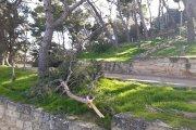 Alcañiz. Siguen sin retirarse pinos rotos por Filomena en Pui Pinos