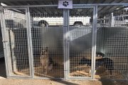 Servicio de recogida de perros abandonados