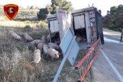 Herido leve al volcar un camión de cerdos en Caspe