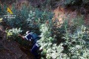 Detenidos por cultivo y elaboración de droga